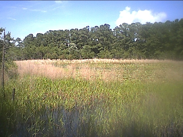 carolina beach lily pond.JPG