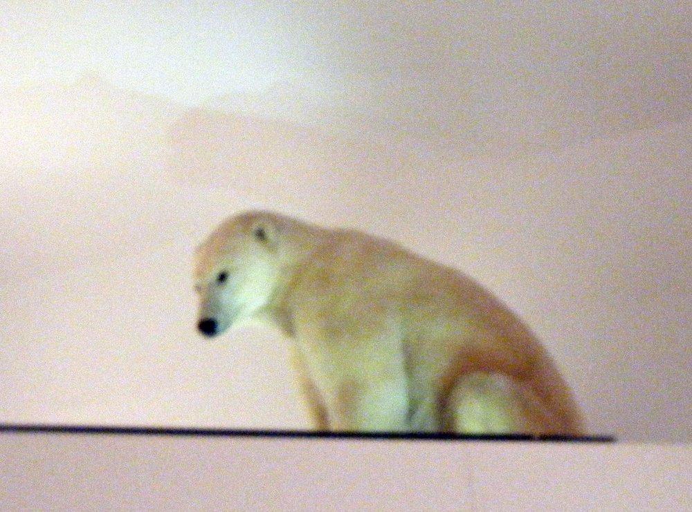 polar bear at Smithsonian.jpg