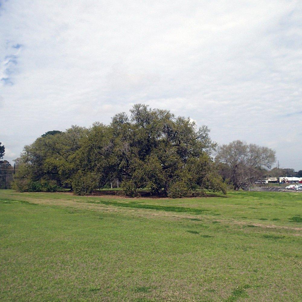 tree playground.jpg