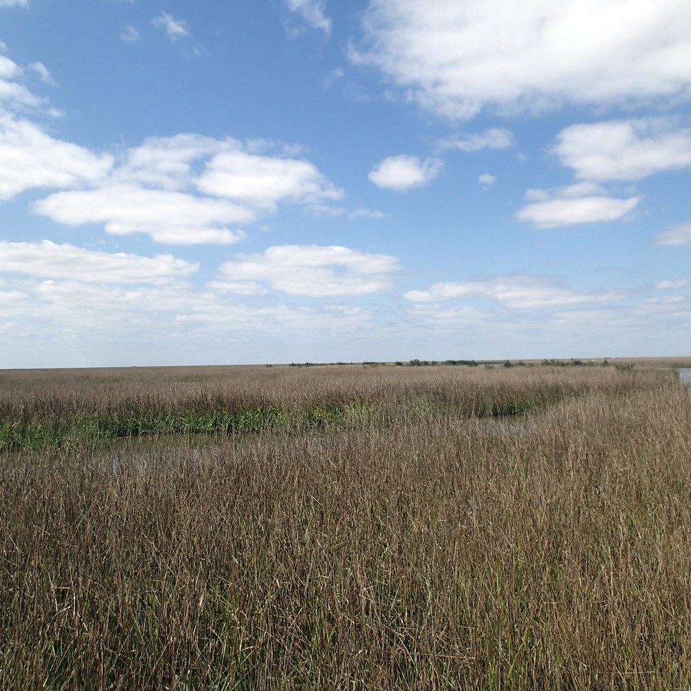 in the salt marsh.jpg