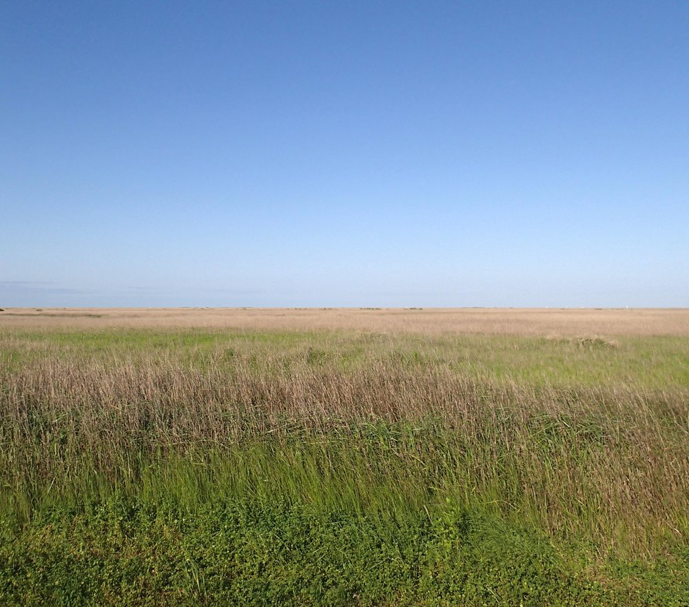 sea of grass.jpg
