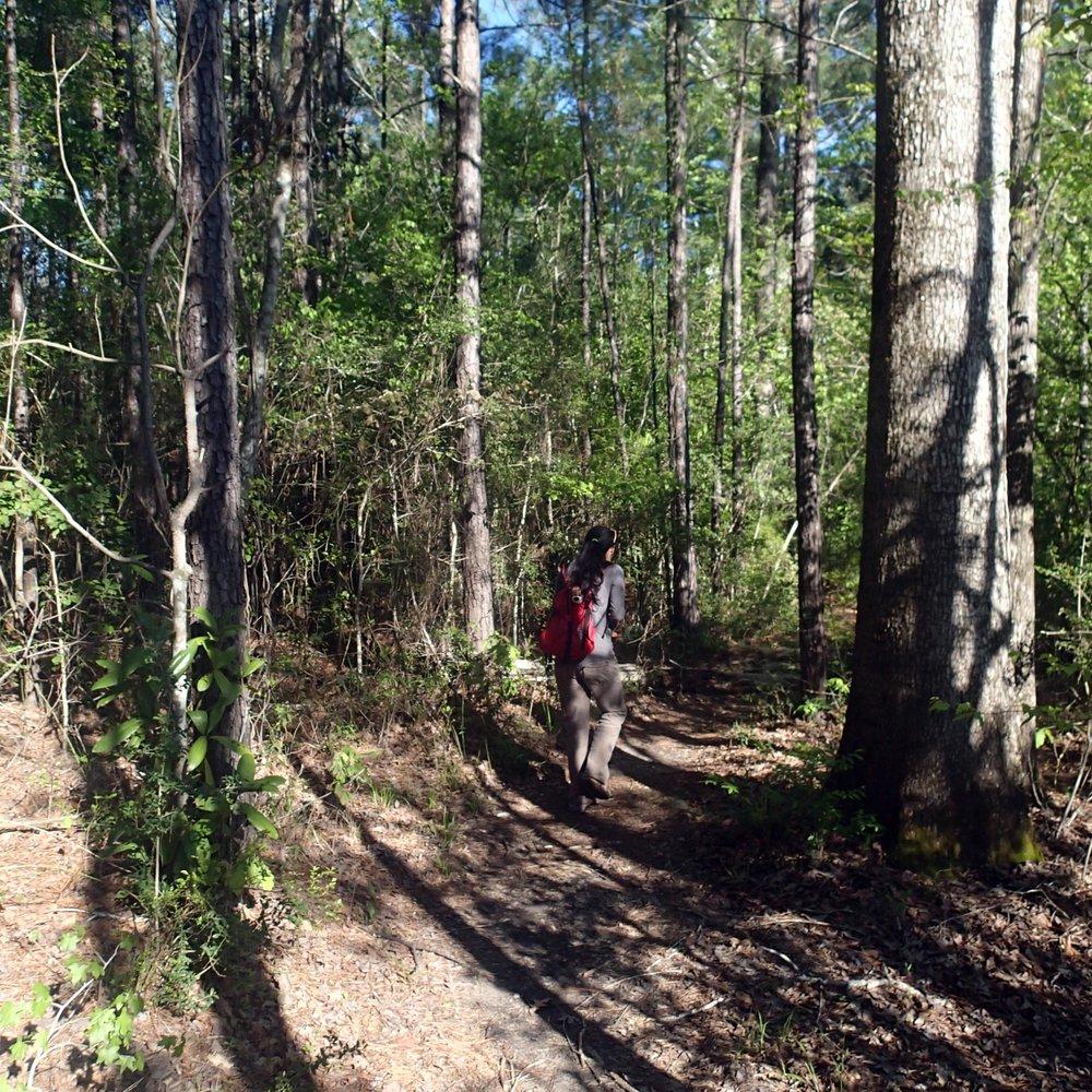 Caroline Dorman trail.jpg