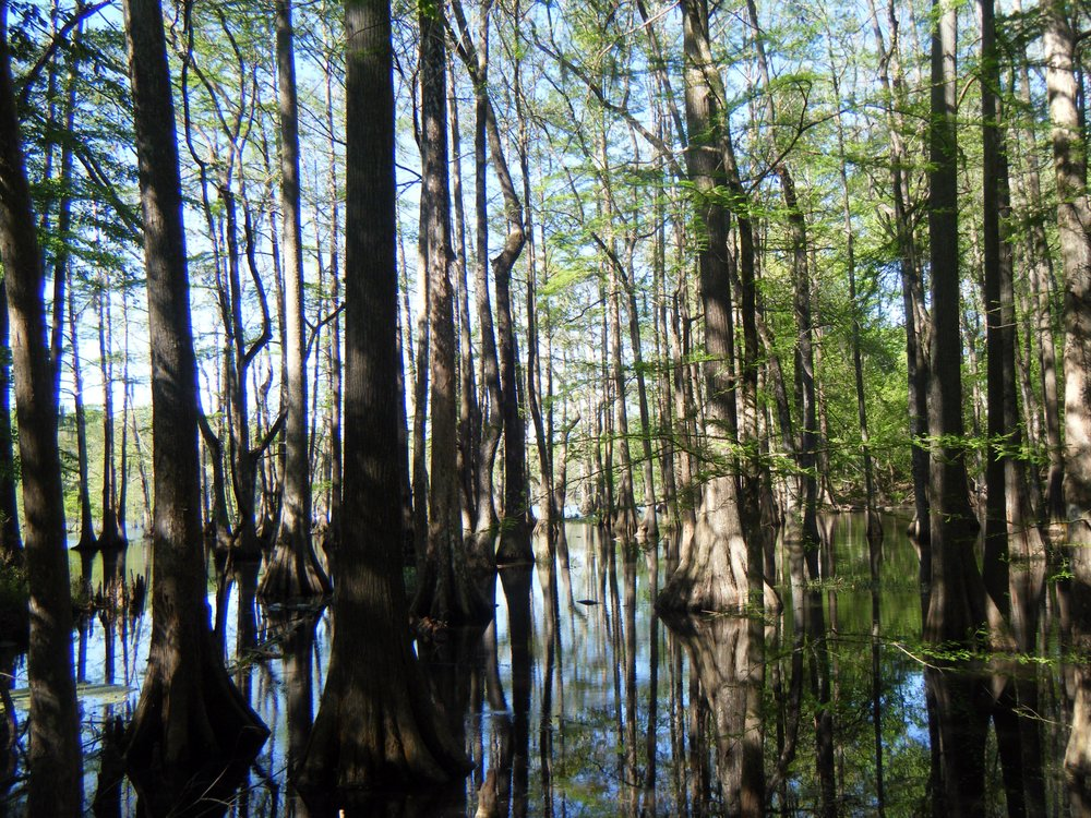 cypress grove 2.jpg