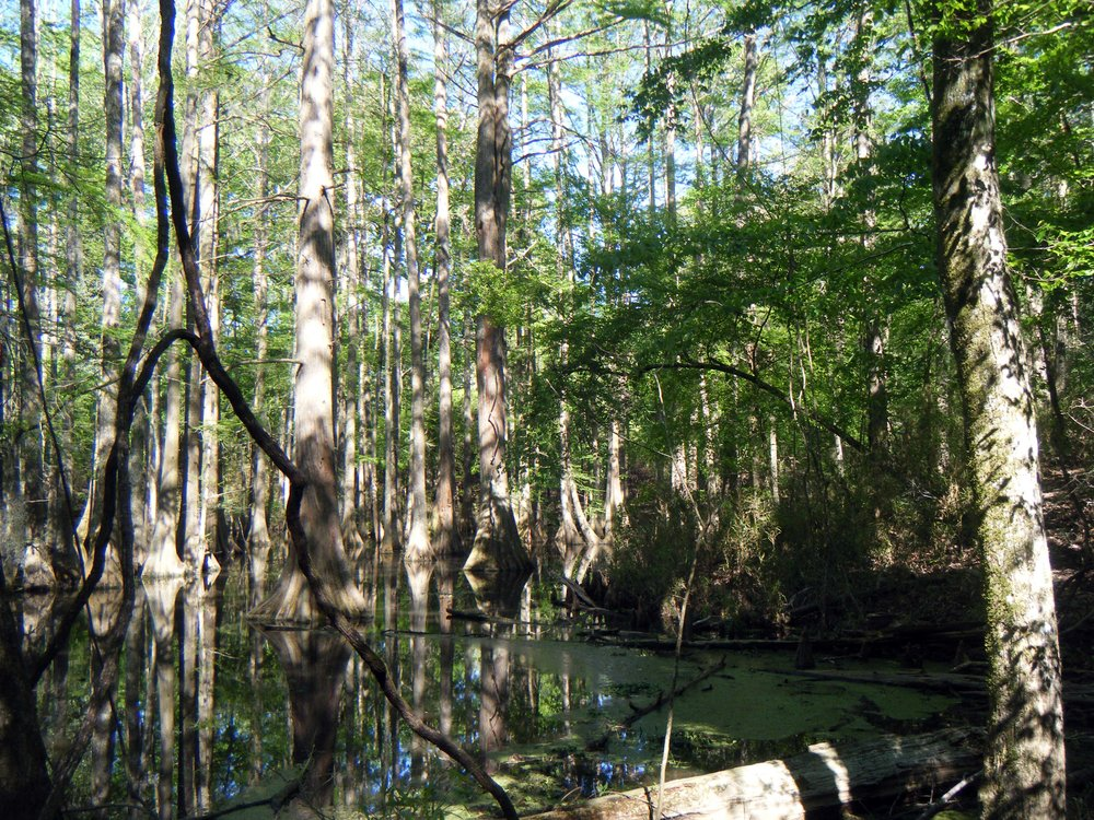 cypress grove.jpg