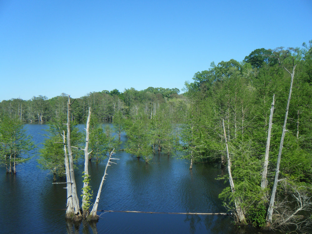 Chicot State Park April 2013.jpg