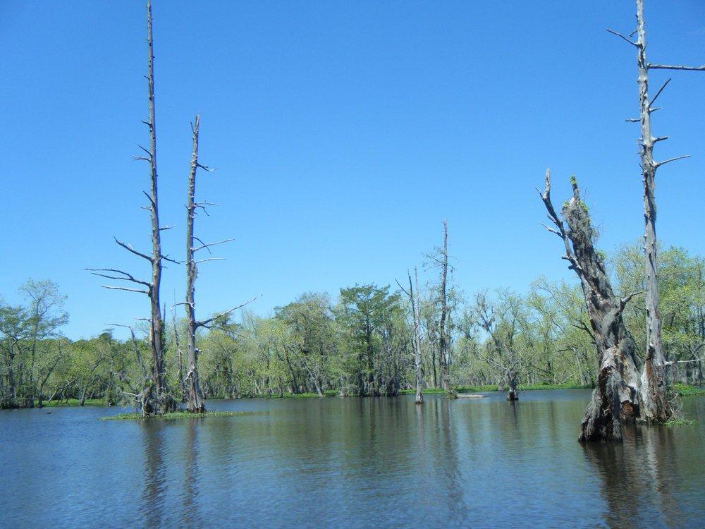 beautiful cypress swamp.jpg