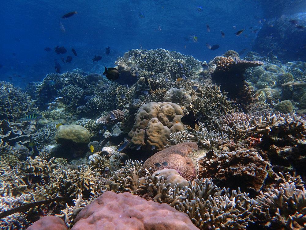 coral on lava.jpg