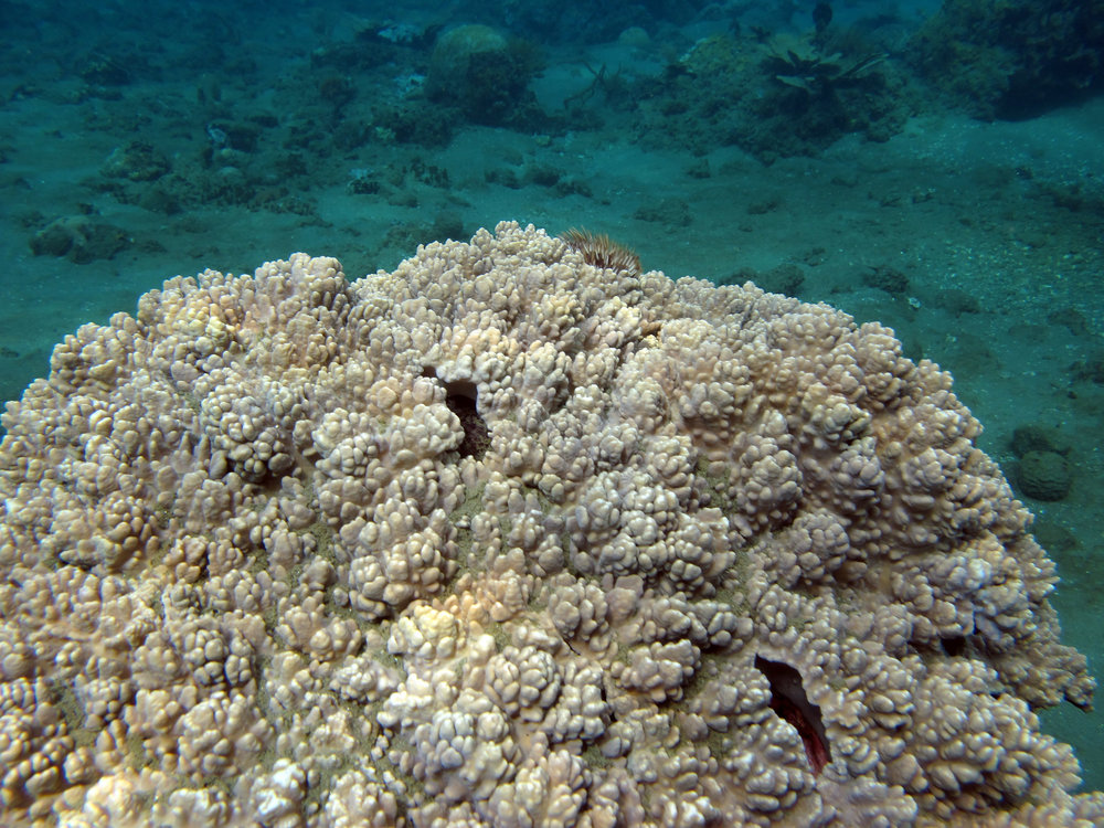 coral area near Air Manis.jpg