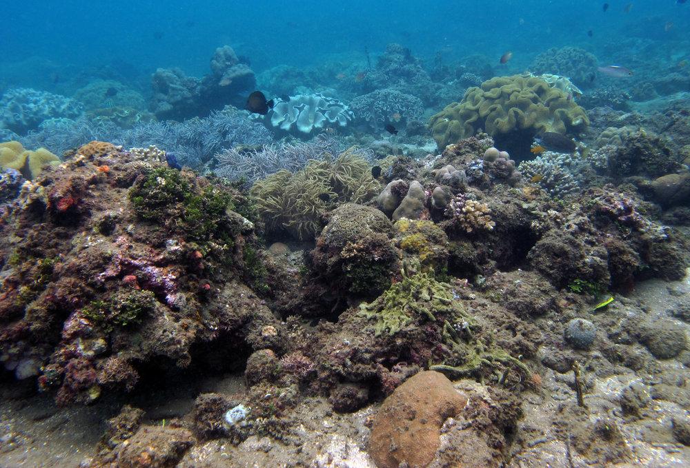 nice reef shot.jpg