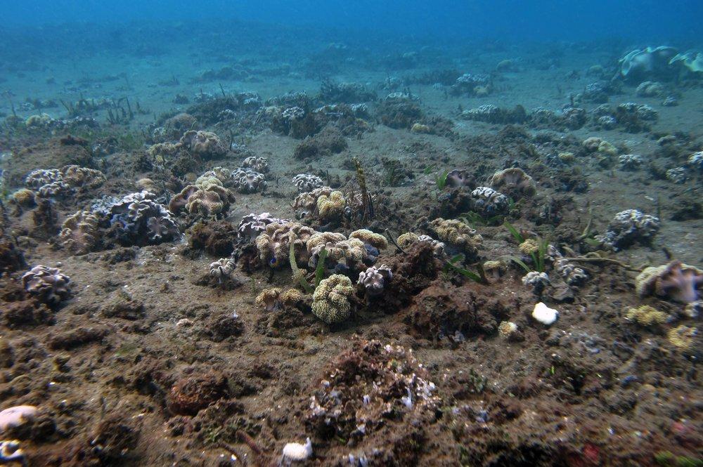 coral community.jpg