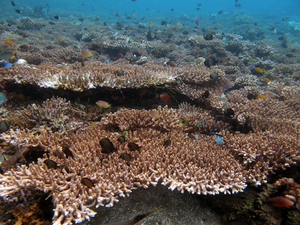 coral area of muck dive.jpg