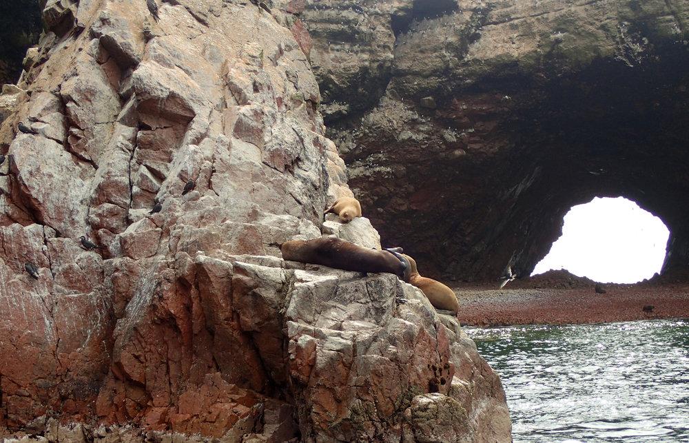lazy sea lions.jpg