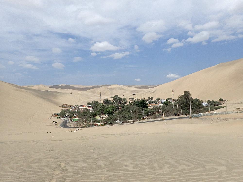 literal oasis.jpg
