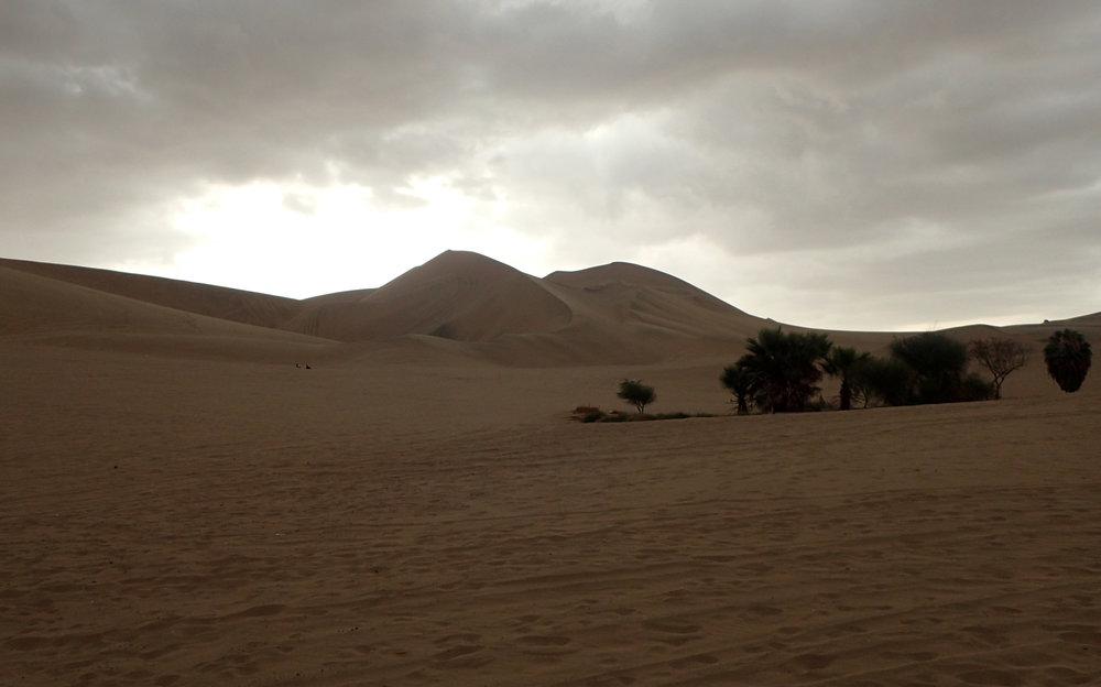 mini-oasis.jpg