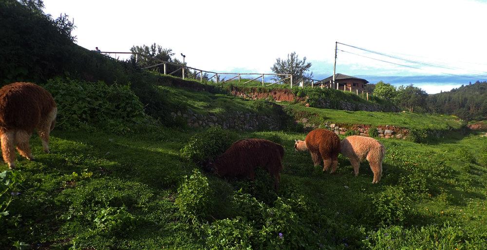 tourist farm.jpg