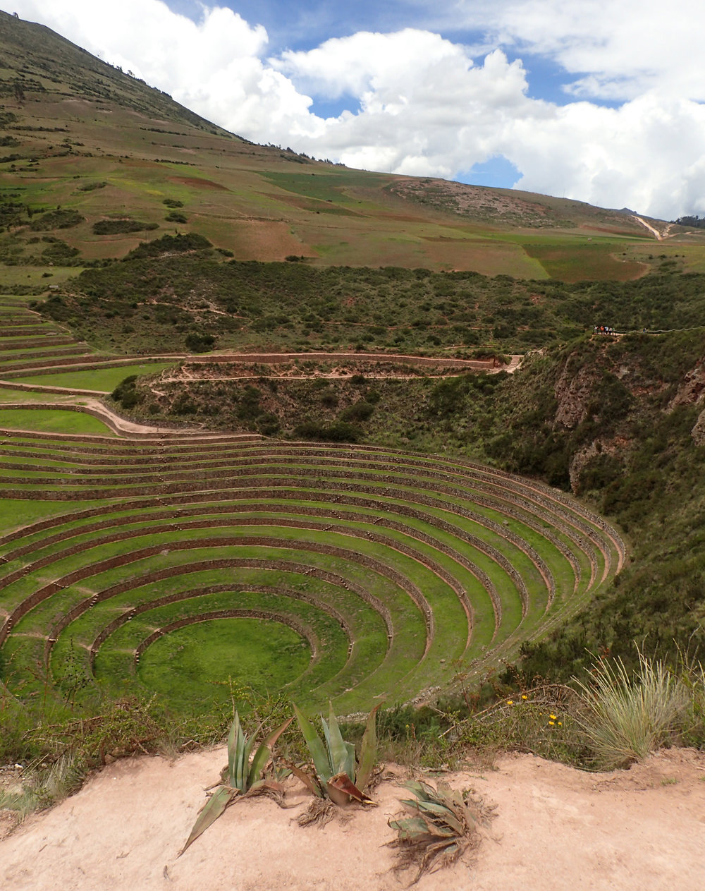 moray crop circles.jpg