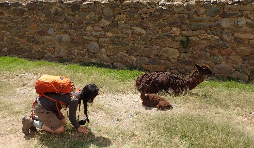 Ciao and baby llama.jpg