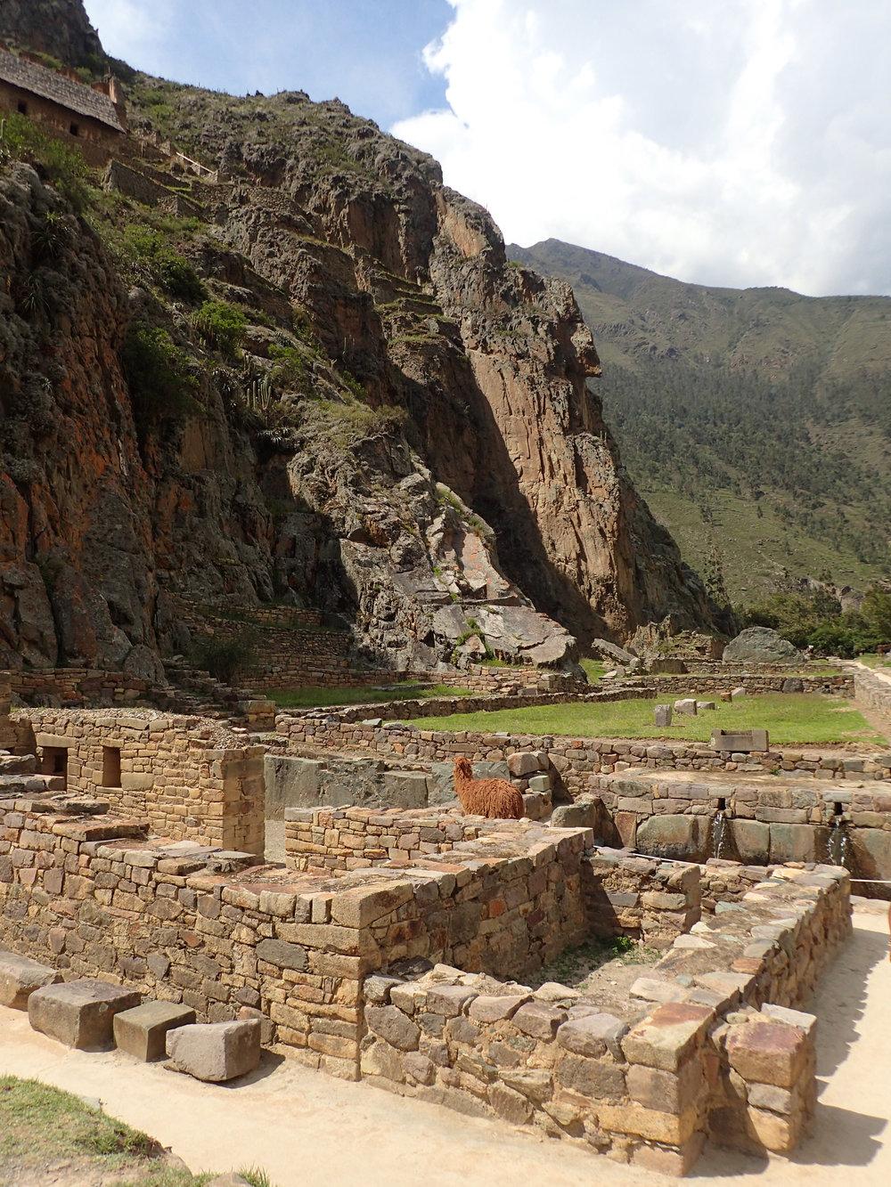 llama in ruins.jpg