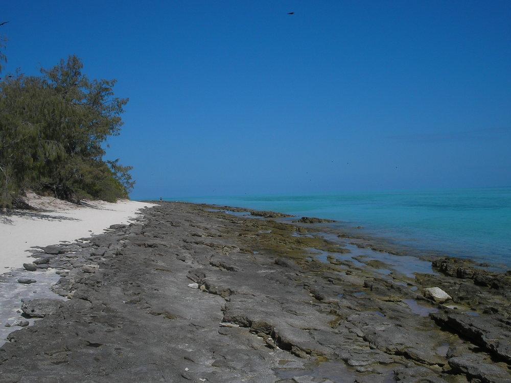 heron island 3.JPG