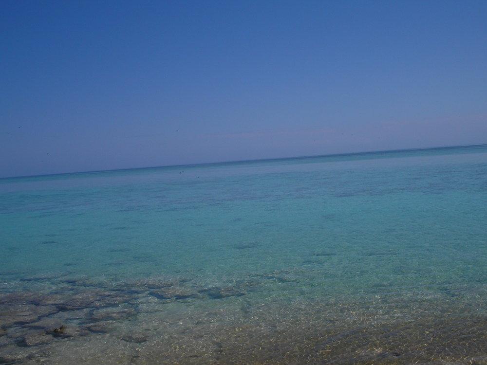 heron island 4.JPG