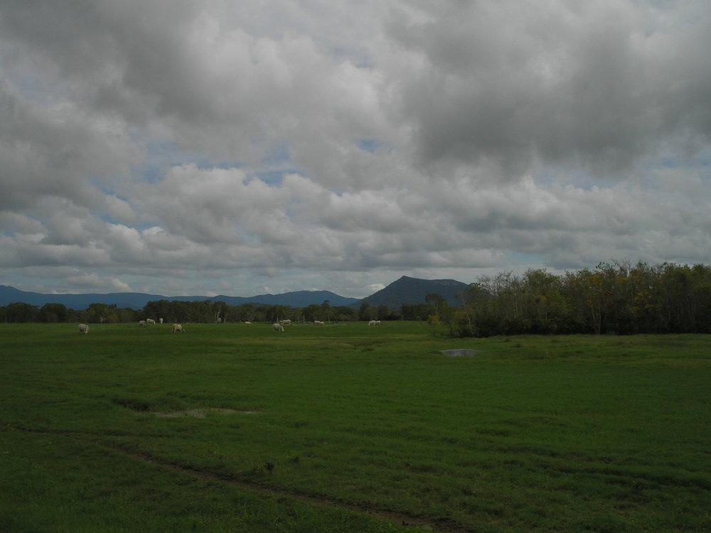 proserpine pasture.JPG