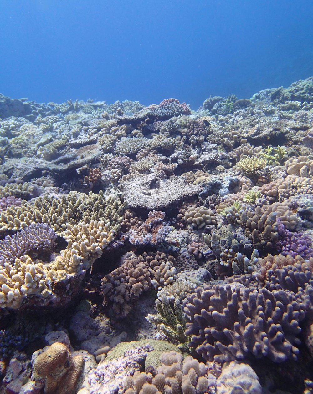good shot of Jewel Reef.jpg