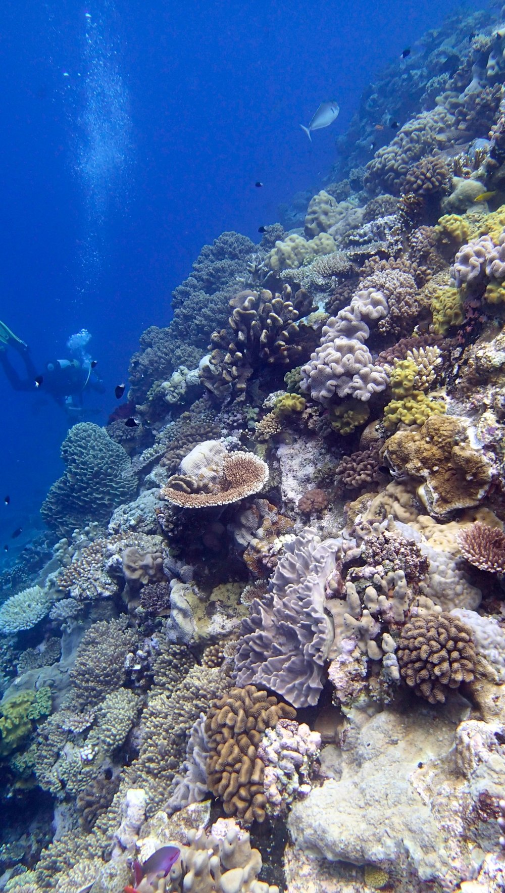 Wood Reef dive 2 (1).jpg