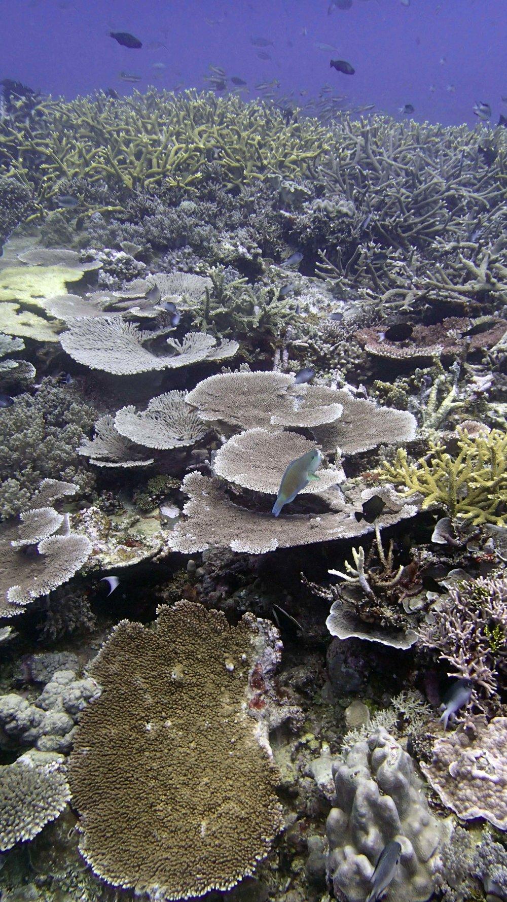 Wood Reef.jpg
