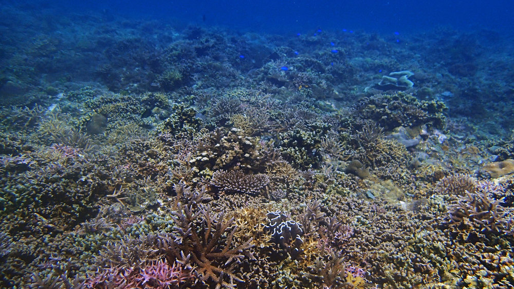 vibrant Filipino reef-Palawan.jpg