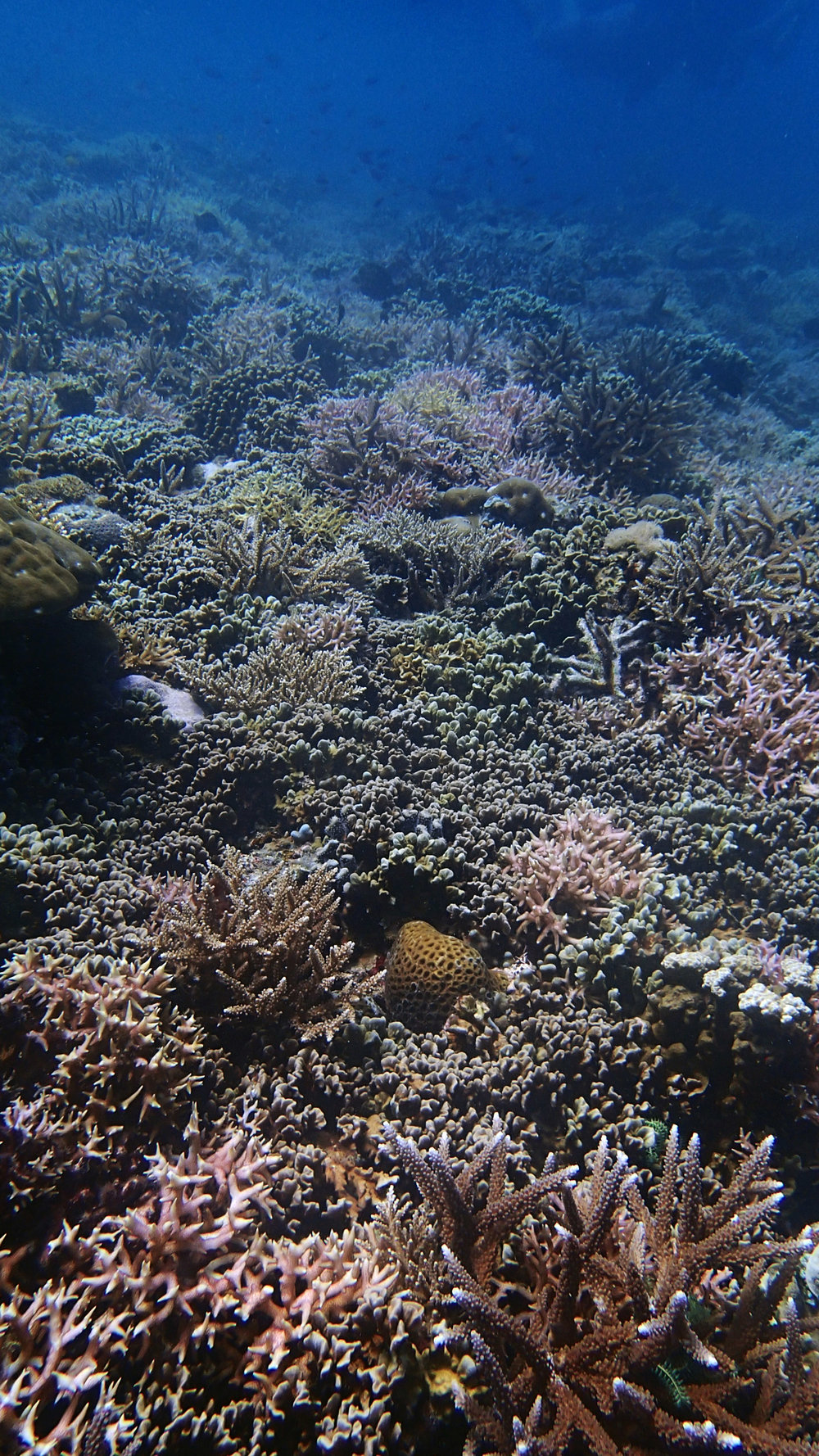 healthy Filipino reef-Palawan.jpg
