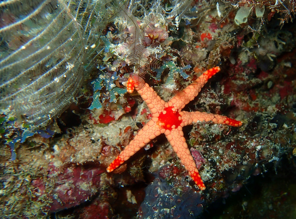 friendly starfish.jpg
