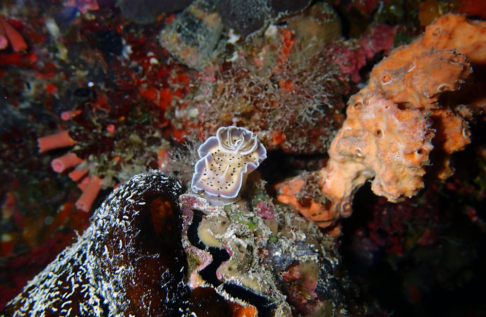 nudi night dive.jpg