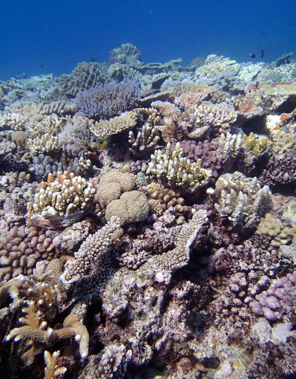 Jewel Reef at 6-7 m.jpg