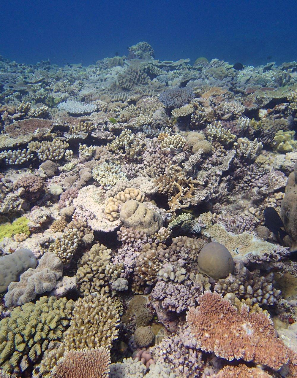 Jewel Reef.jpg