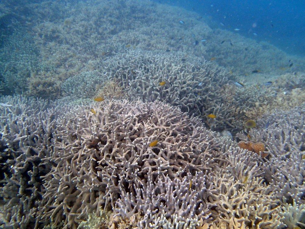 Monkman Reef.jpg