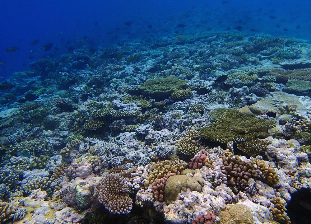 reef crest.jpg