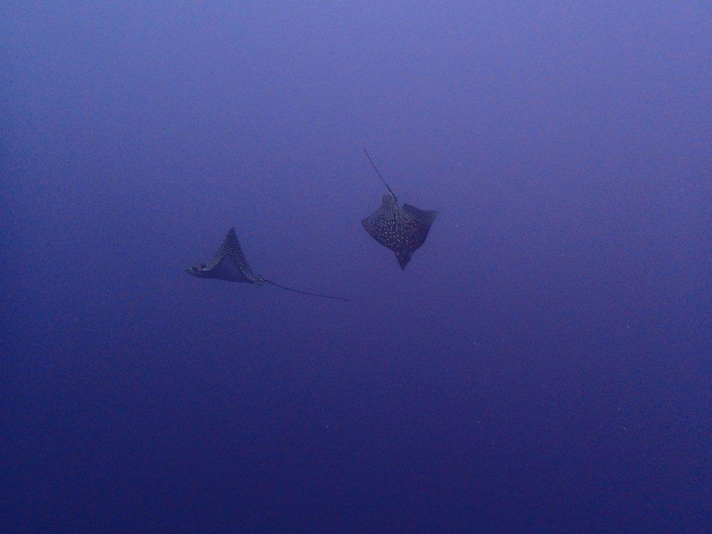 rays at Nono.jpg