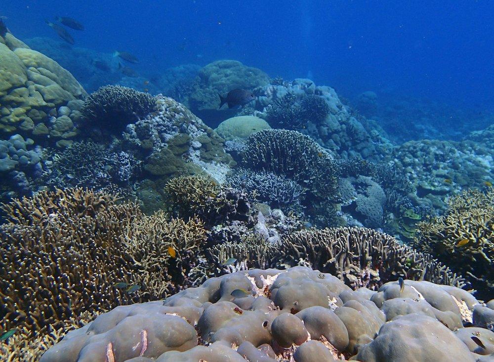 Sikopo Island.jpg