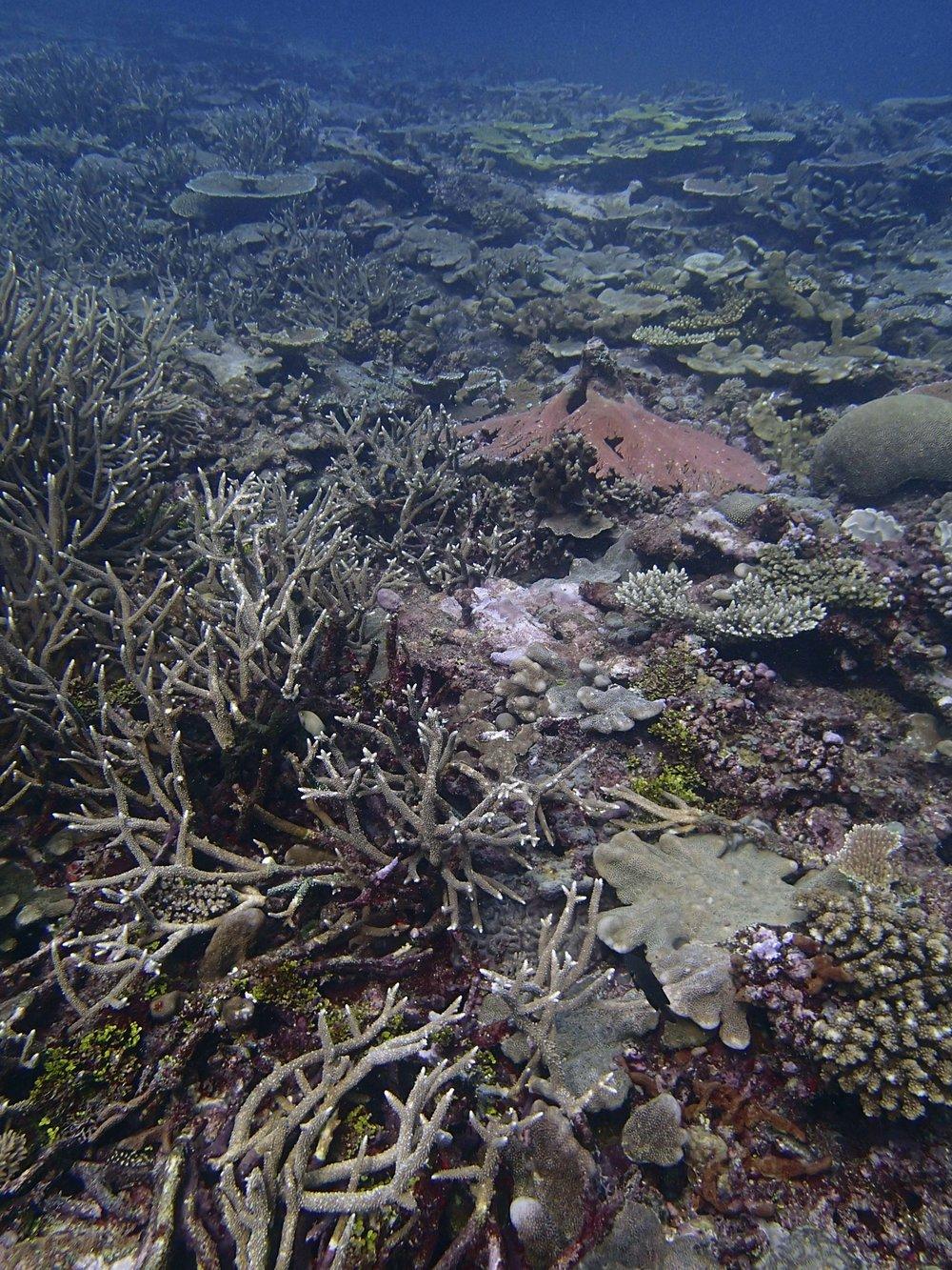 Gizo Island.jpg