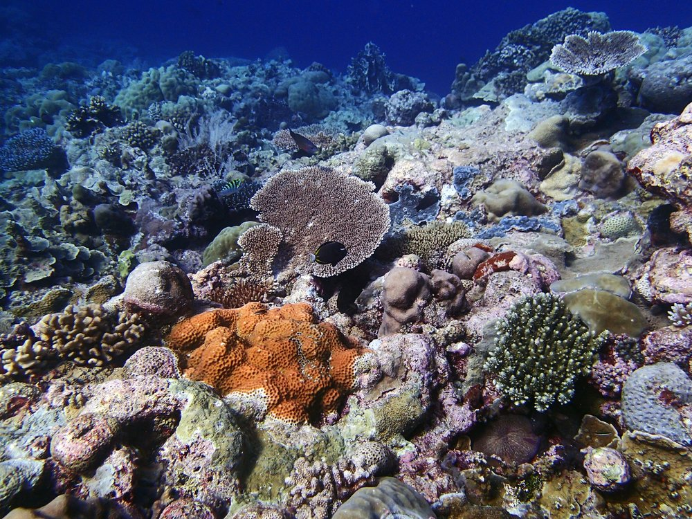 Velasco Reef 1-28-15.jpg