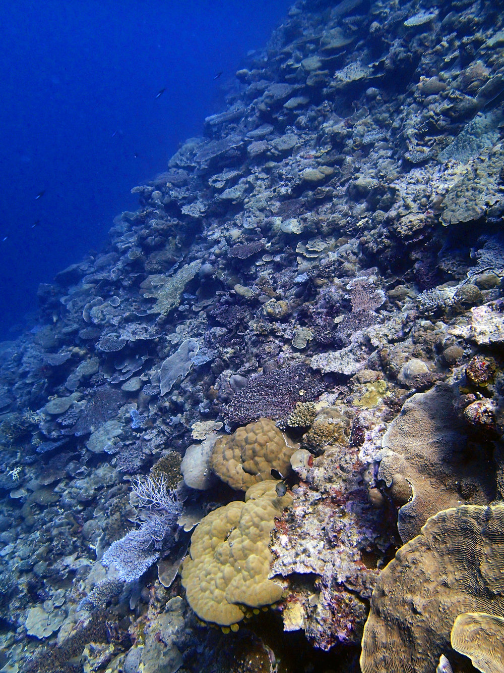 Velasco Reef dive 2.jpg