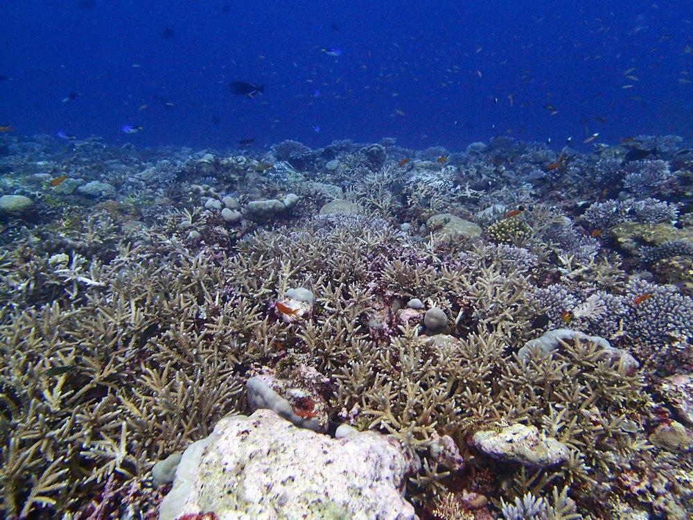Egmont Reef.jpg