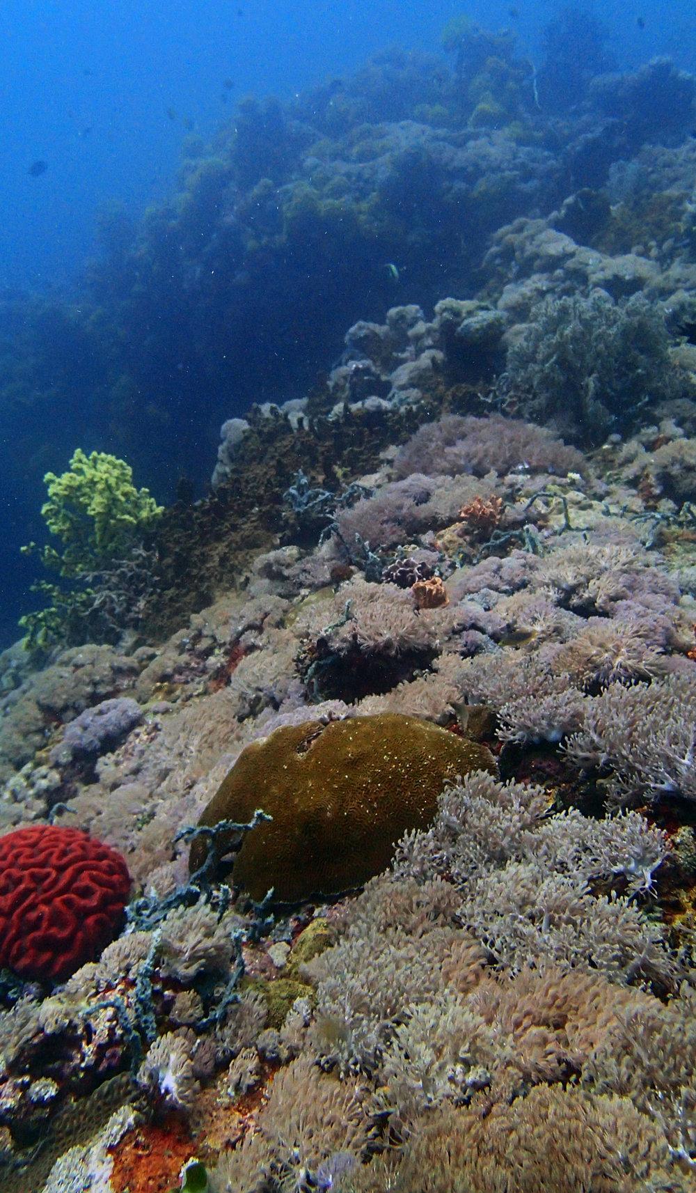 first dive at Anilao 9-30-16.jpg