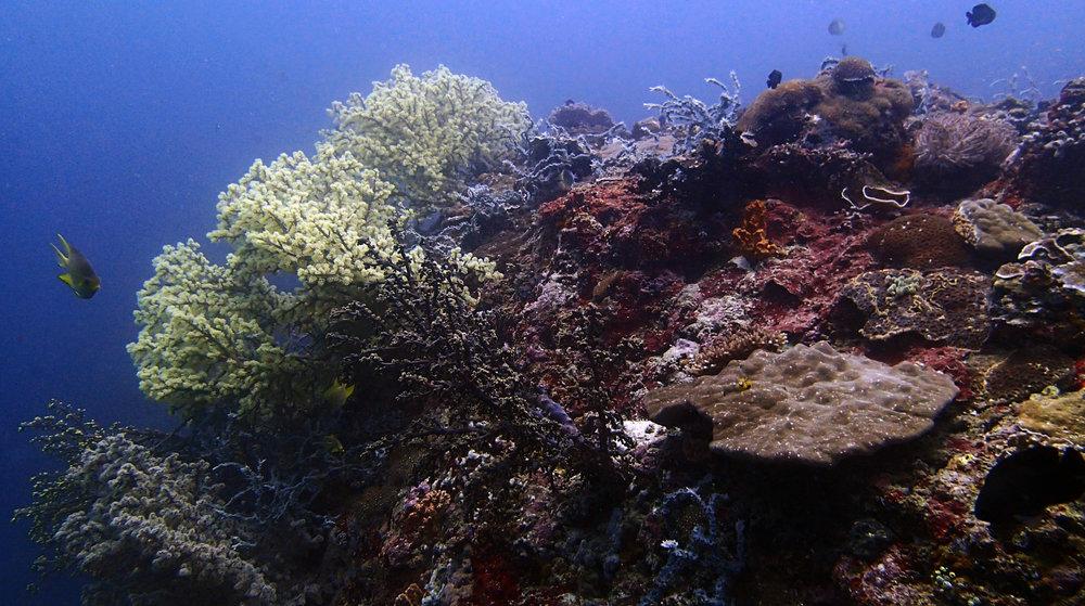 first dive at Anilao.jpg