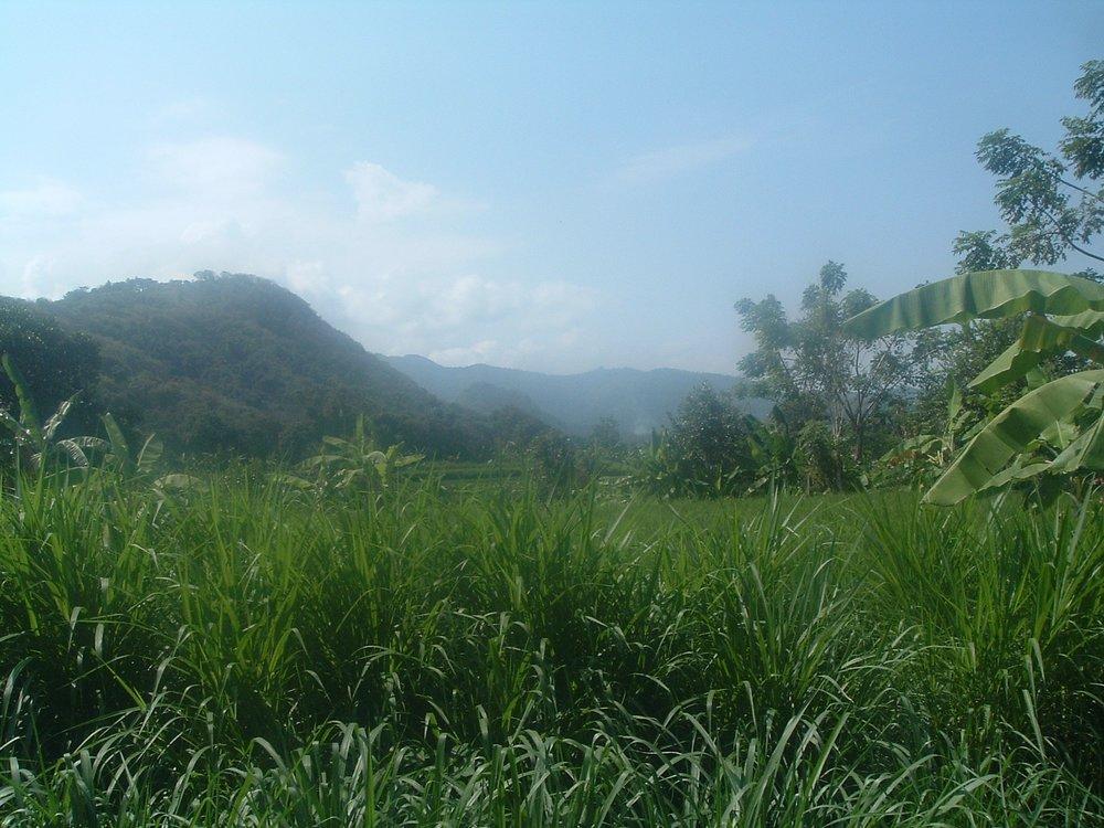 green bali.JPG