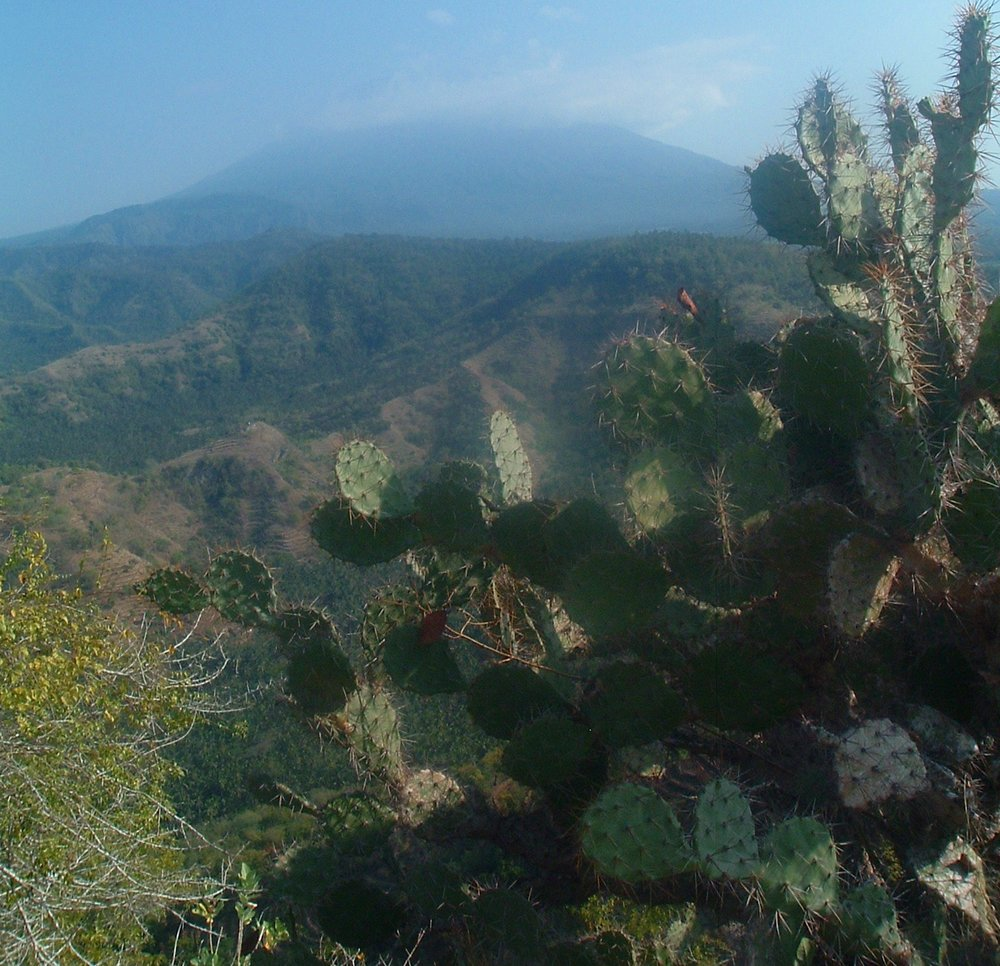 agung and cacti.JPG