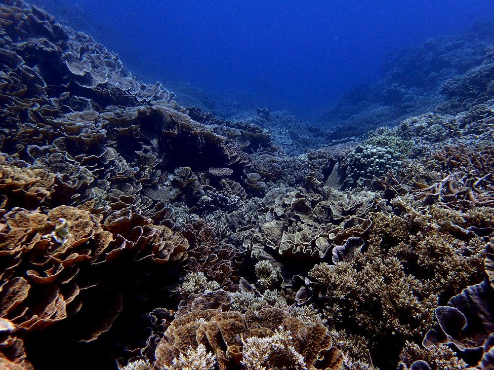 Banda Islands.jpg