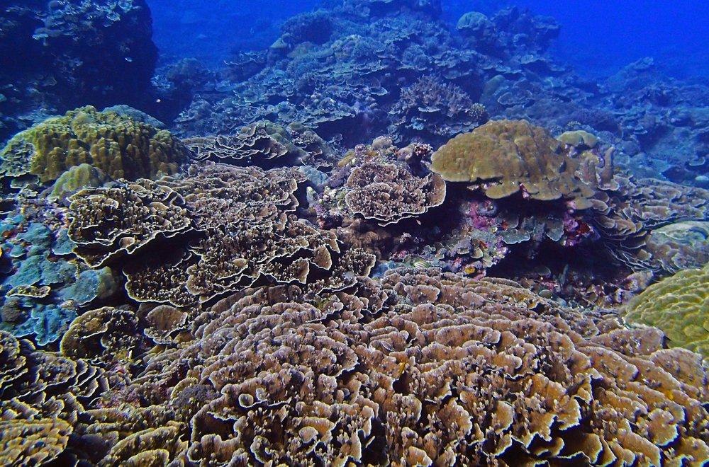epic Palau shot.jpg