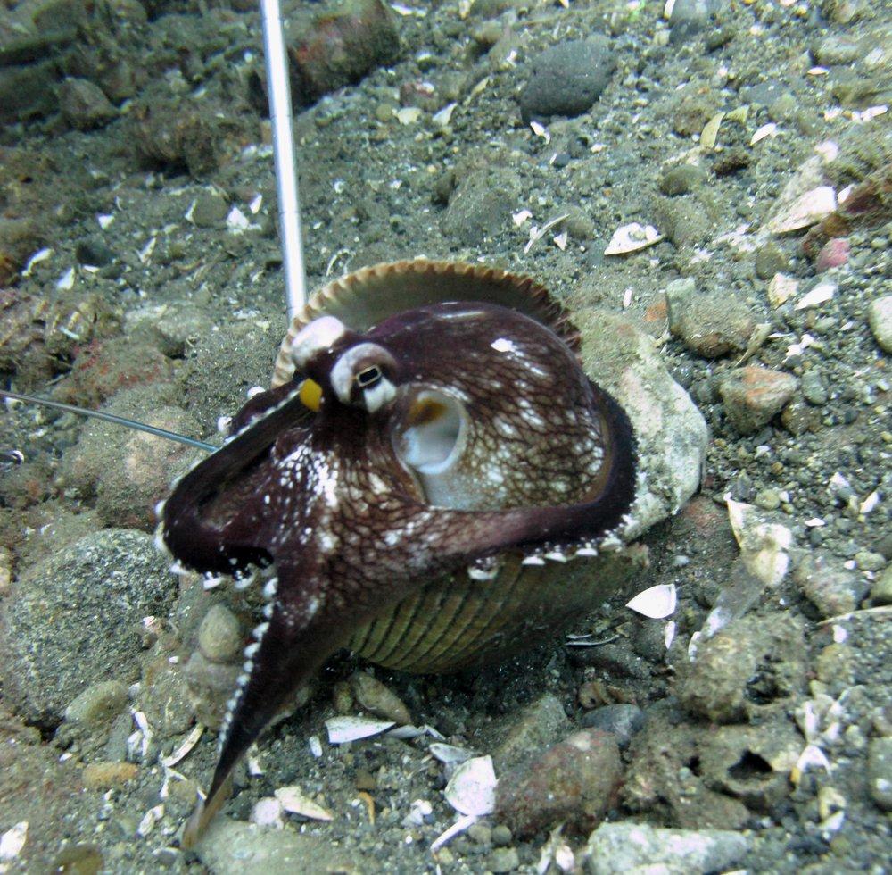 best octopus shot.jpg