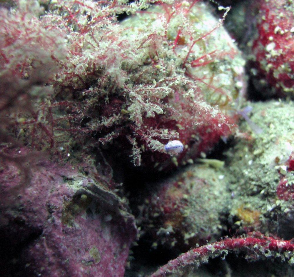 nudibranch.jpg